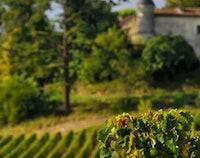 Halfdaagse Wijntrip naar Saint-Émilion