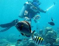Curaçao Duiken & Sightseeing avontuur
