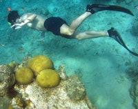 Snorkelen bij de Caracasbaai
